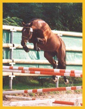 Cheval saut d 39 obstacle centerblog - Frison saut d obstacle ...